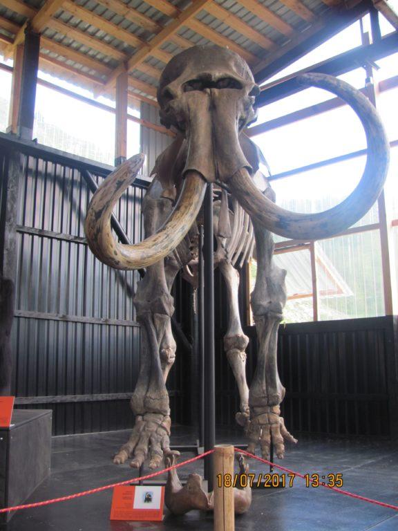 Paleopark 1